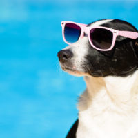 Stay Cool During the Dog Days of Summer with Home Energy Savings