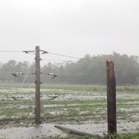 Outages Across N.C. Electric Cooperative Network Reach 185,500