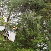 Outages Across N.C. Electric Cooperative Network Surpass 260,000
