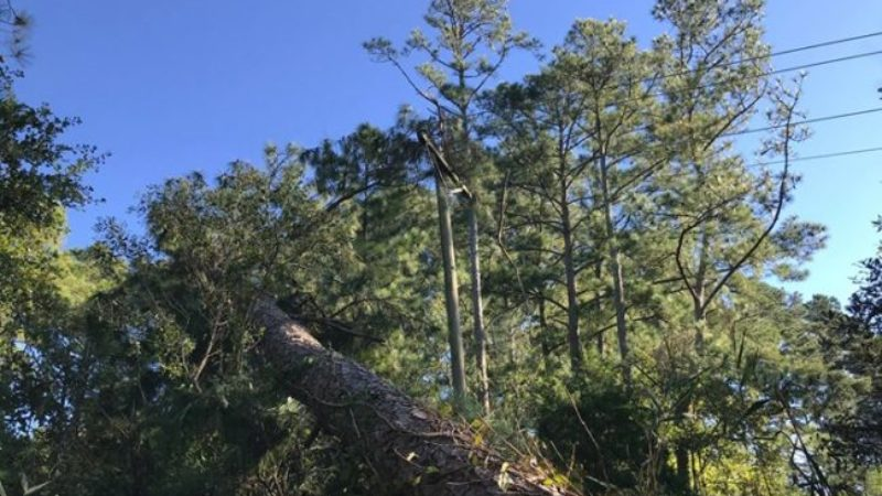 Crews Reduce Power Outages from Tropical Storm Michael to 43,000